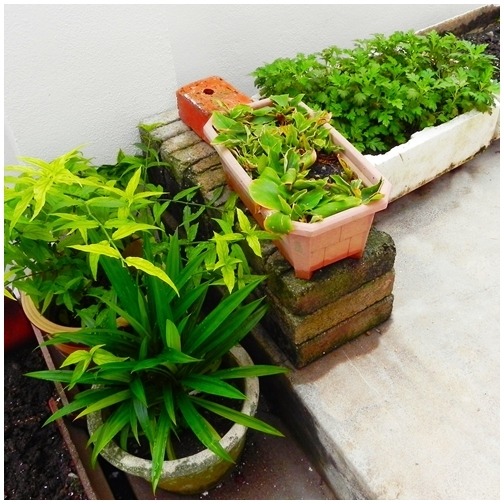 Low-budget Garden Ideas - Home Genius